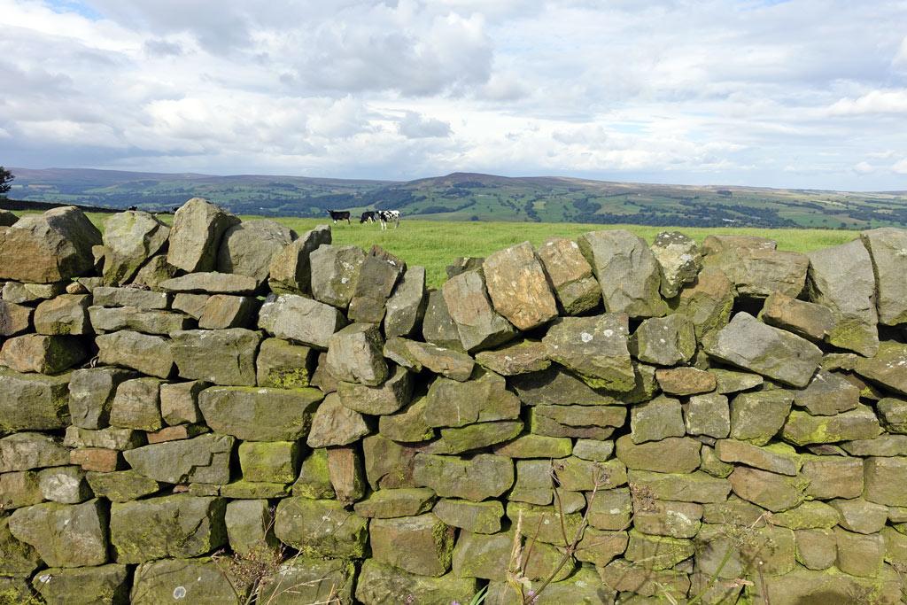 dry-stone-wall-cow.jpg