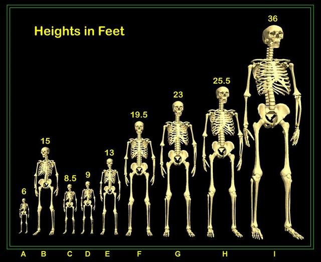 human_height.jpg