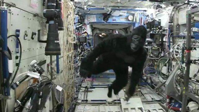 iss_gorilla_suit.jpg