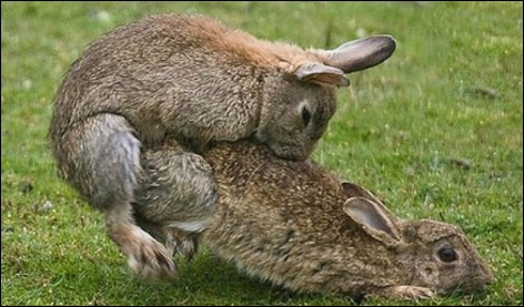 rabbit_australia.jpg