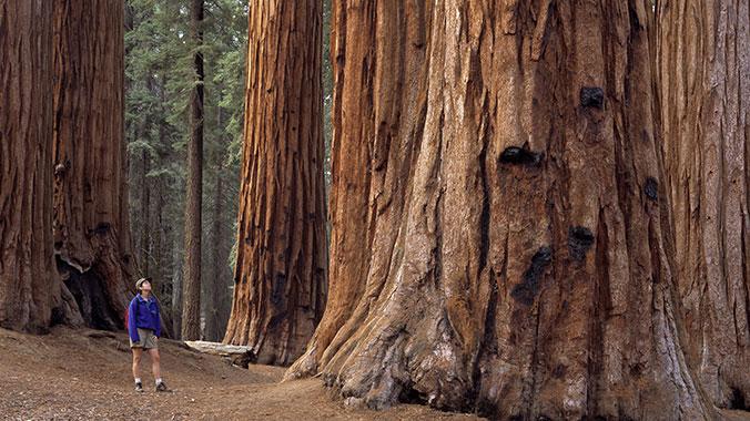 redwood_ca_1.jpg