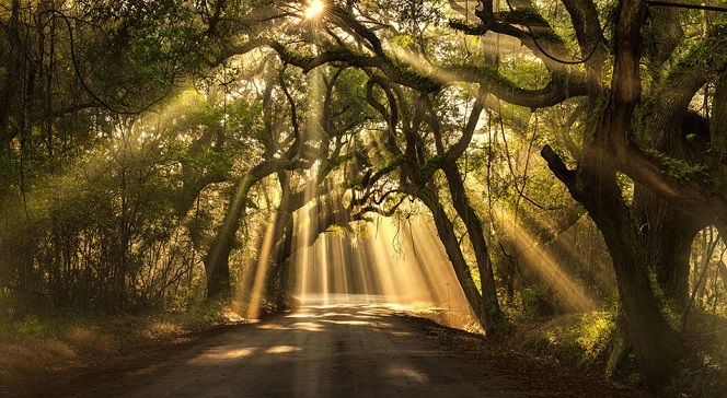 sun_through-trees_1.jpg