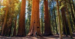 redwood_ca_2.jpg