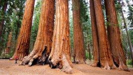 redwood_ca_3.jpg