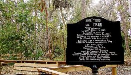 tree_plaque_1.jpg