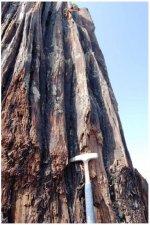 stump_prehistoric_6.jpg