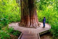 Mount+Rainier+National+Park_douglas_Fur_1.jpg