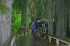 Mount+Rainier+National+Park_douglas_Fur_3.jpg