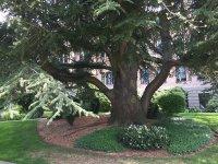 Holy_Names_Academy_Tree.JPG