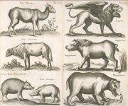 Screenshot 2021-07-19 at 16-43-43 Historiae naturalis de quadrupetibus libri.jpg