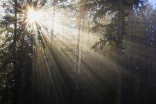 sun_through-trees_2.jpg