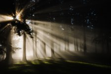 sun_through-trees_3.jpg