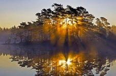 sun_through-trees_4.jpg