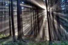 sun_through-trees_5.jpg
