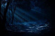 moon_through_trees_2.jpg