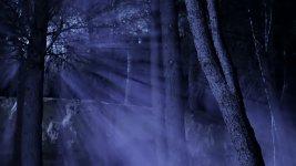 moon_through_trees_4.jpg